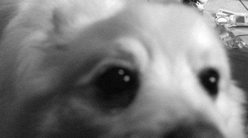Dove posso trovare film per cani cercasugoogle for Dove posso trovare i progetti per la mia casa